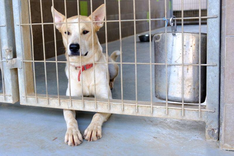 dog-surrendered-to-shelter