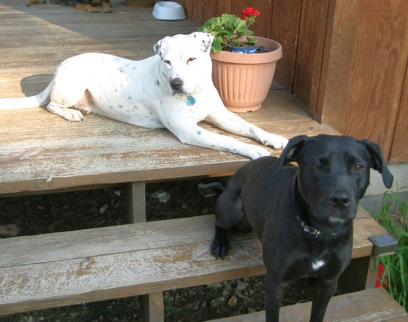 maximize outdoor space for your dogs
