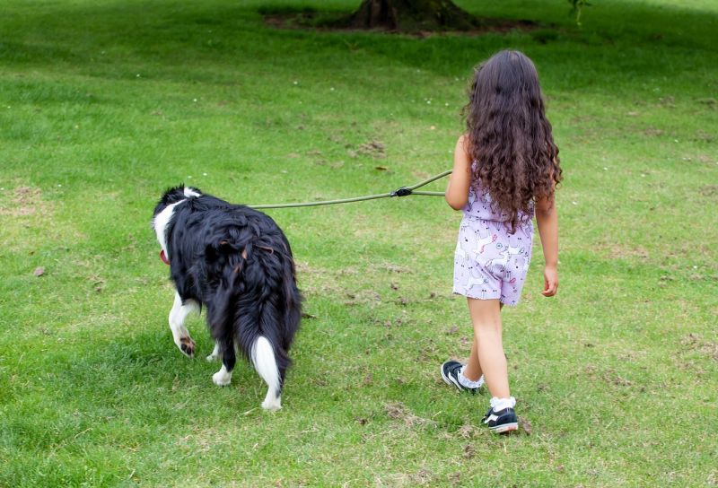 family dog contract responsibilities