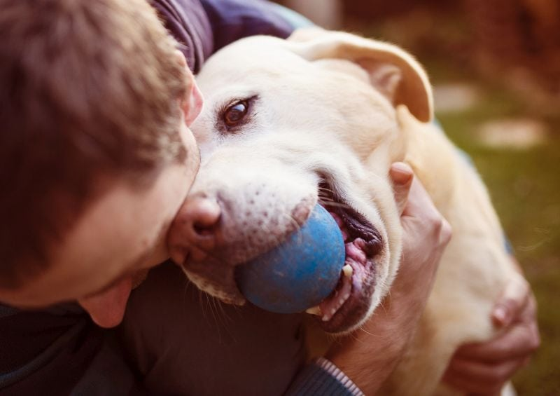 foods that work for your dog