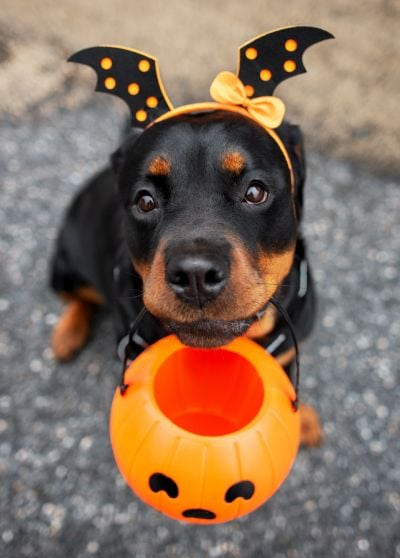 Rottweilers can be silly