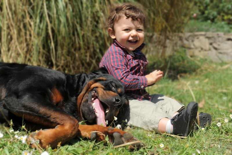 is a Rottie right for your family