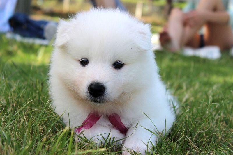 bear-inspired dog names