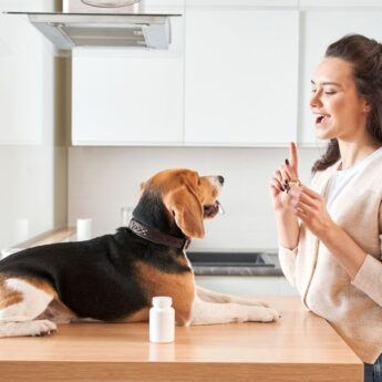 best pill pockets for dogs