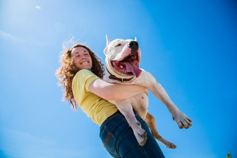 The pros and cons of being a dog foster