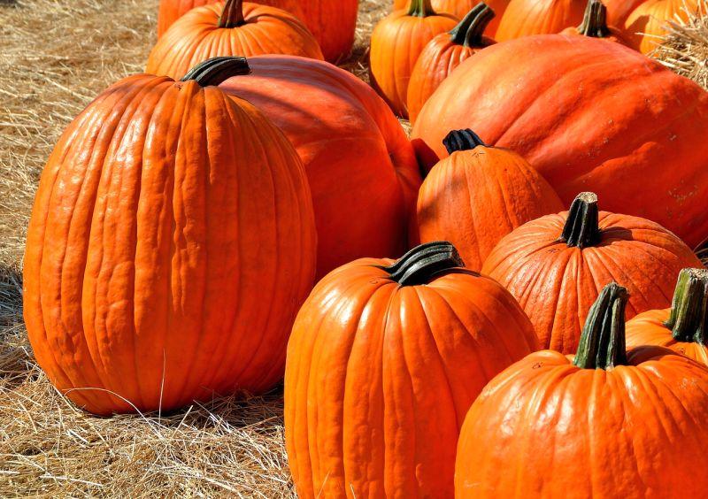 pumpkin as a MoM alternative