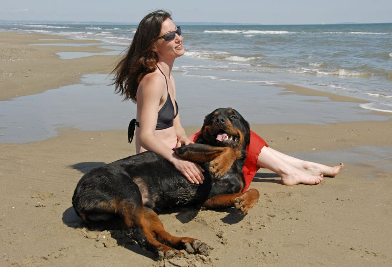 Rottweilers are exceptionally loving dogs