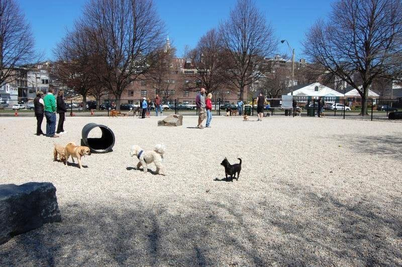 South Boston Bark Park