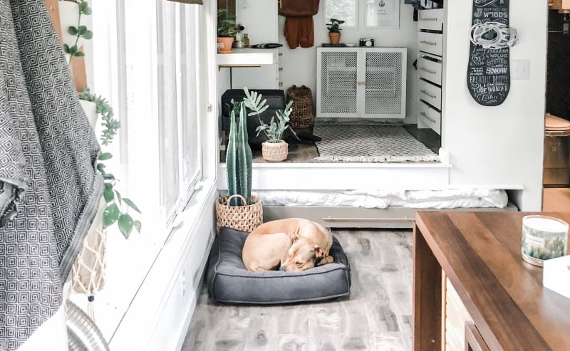 make sure your dog has his own space in tiny house