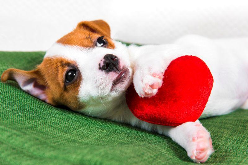 gender neutral dog names meaning love