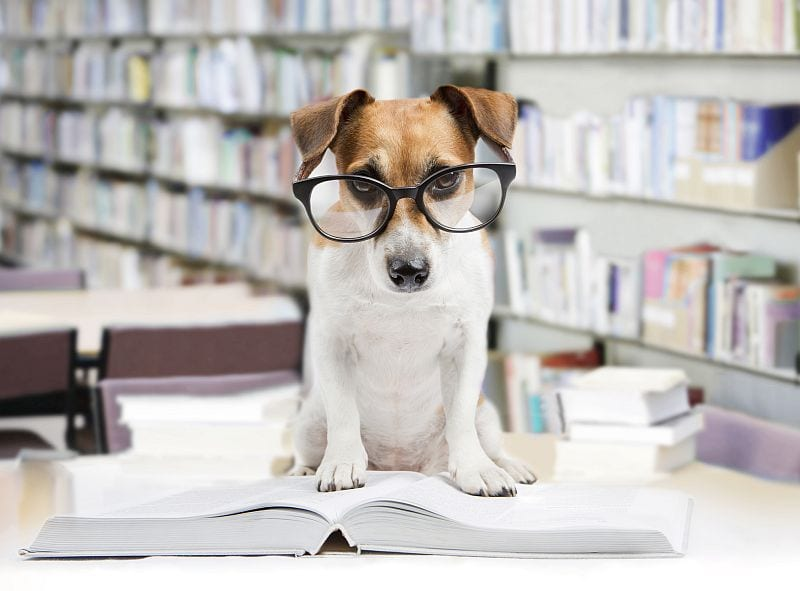 what makes a dog smart