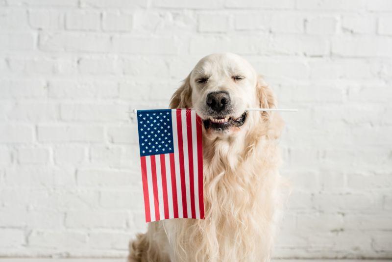 benefits of US-made dog food