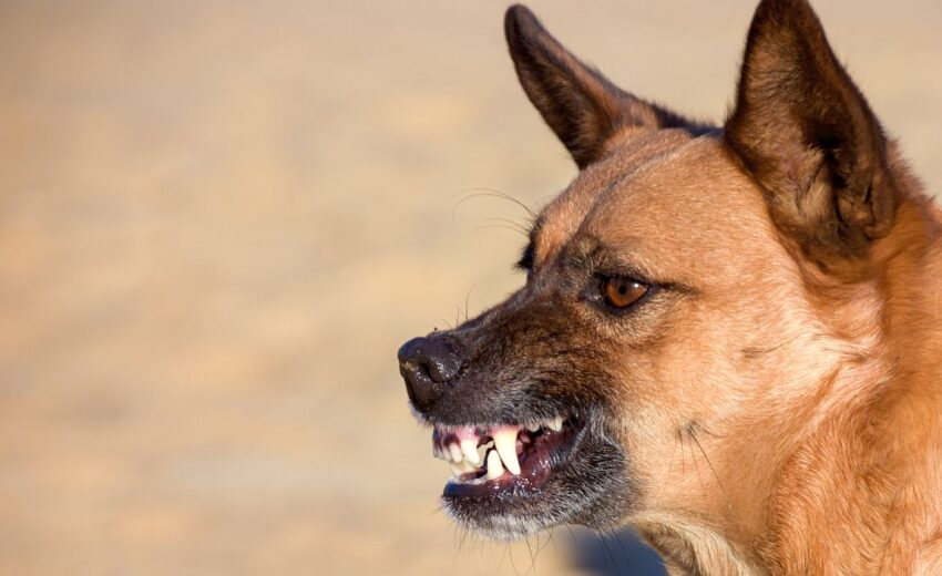 tips for dealing with aggressive dog