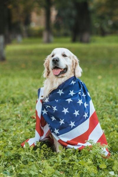 US-sourced dog food ingredients