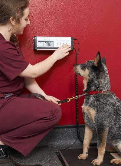 get your vet to check aggressive dogs