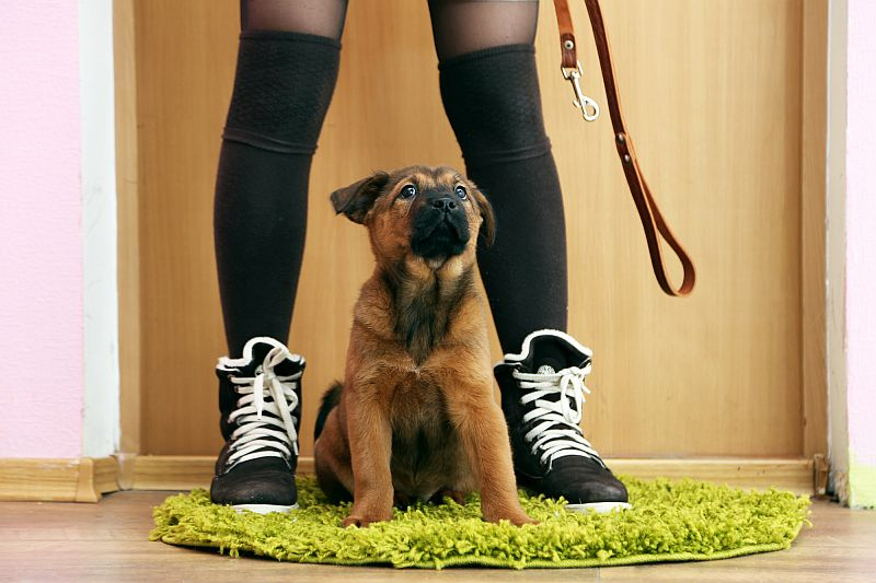 things to look for in a puppy leash