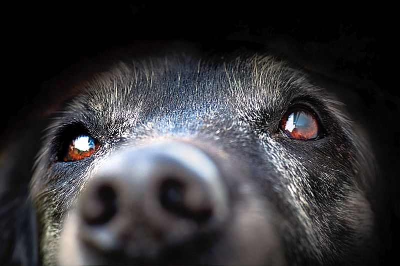 Causes of hyperkeratosis in dogs