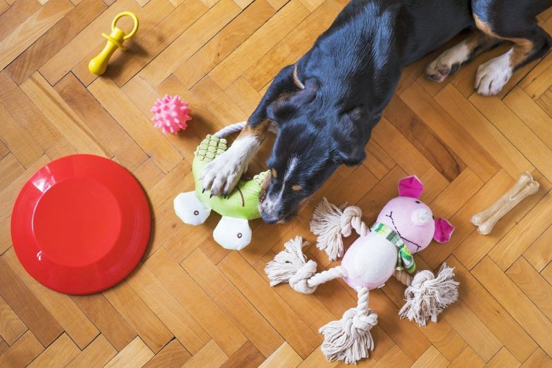 keep your dog's old toys for memories