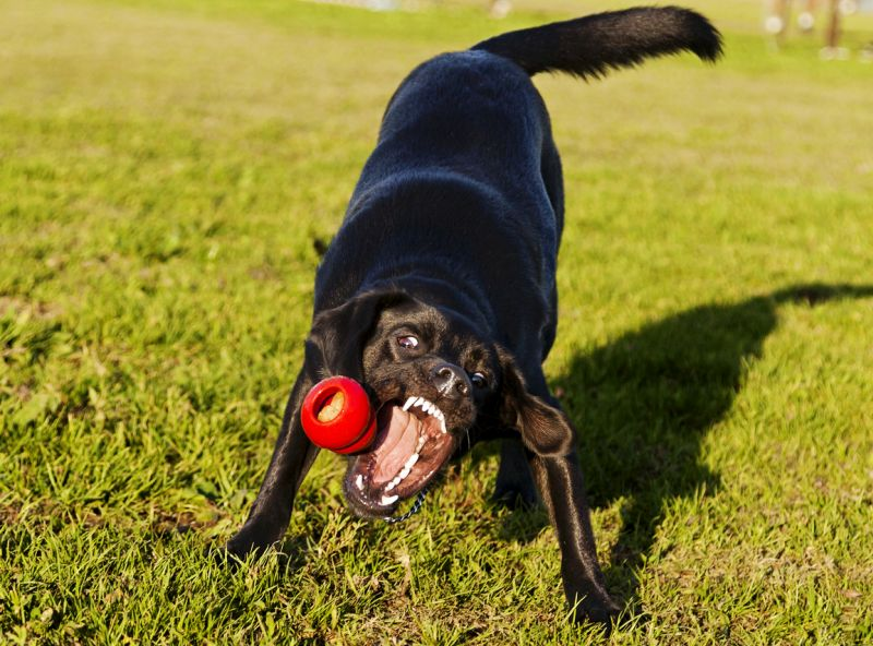 The benefits of Kongs
