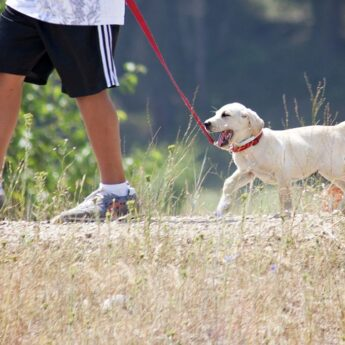 best leashes for puppies