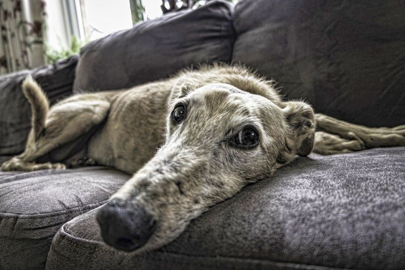 make lifestyle adjustments for old dogs