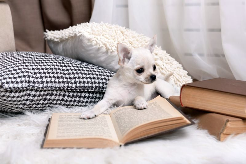 Literary names for female dogs