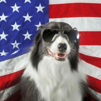 Best US-made Dog Foods