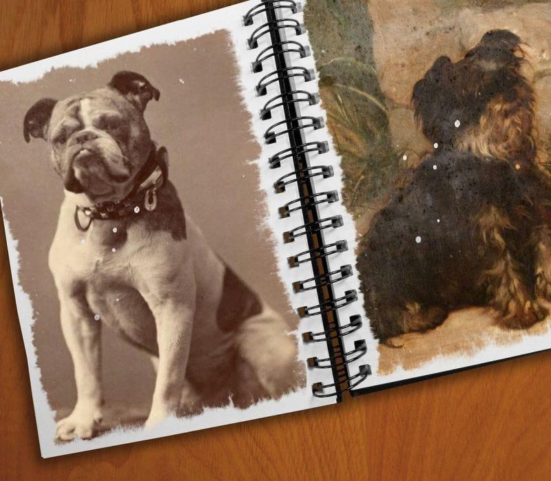 make a photo album of your pet