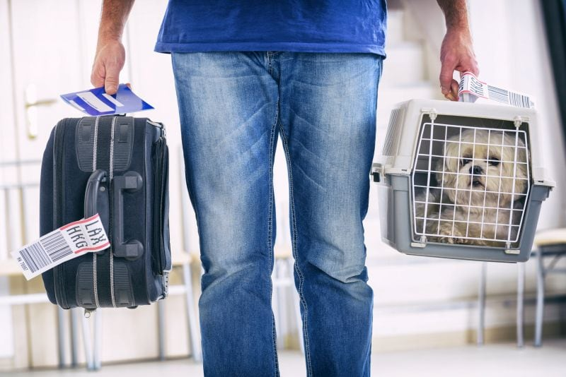 best pet transport service