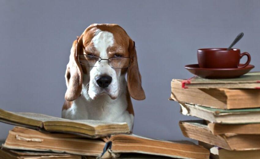 the smartest dog breeds