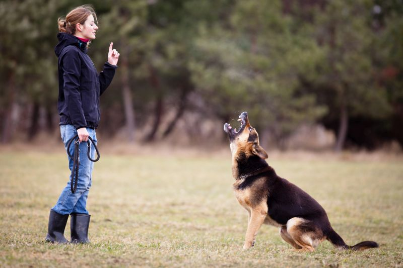 tips for training aggressive dogs