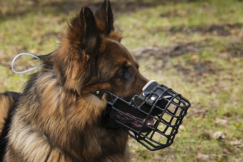 use a muzzle with aggressive dogs