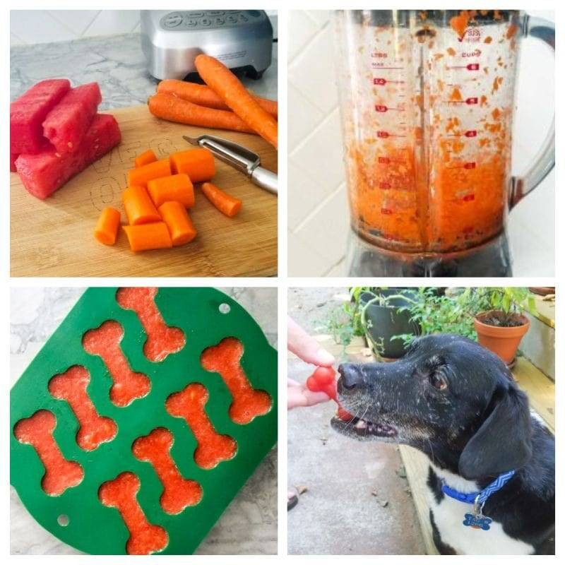 watermelon and carrot popsicles for dogs
