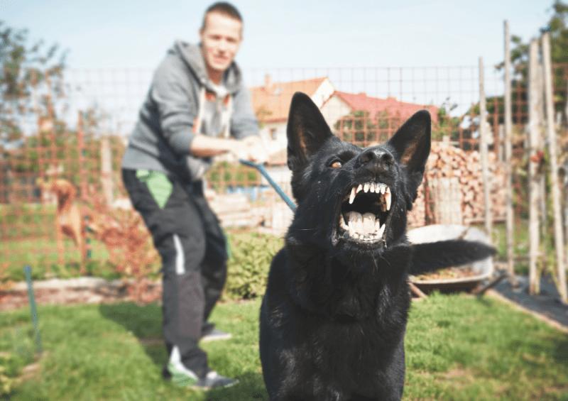 fearful reactive dog