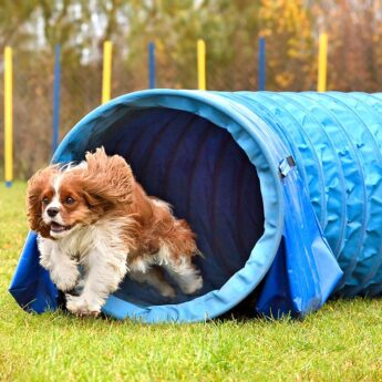 Best Agility Tunnel for Dogs
