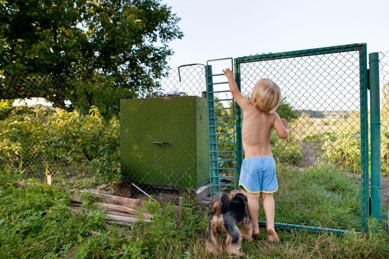 some dogs run through open gates