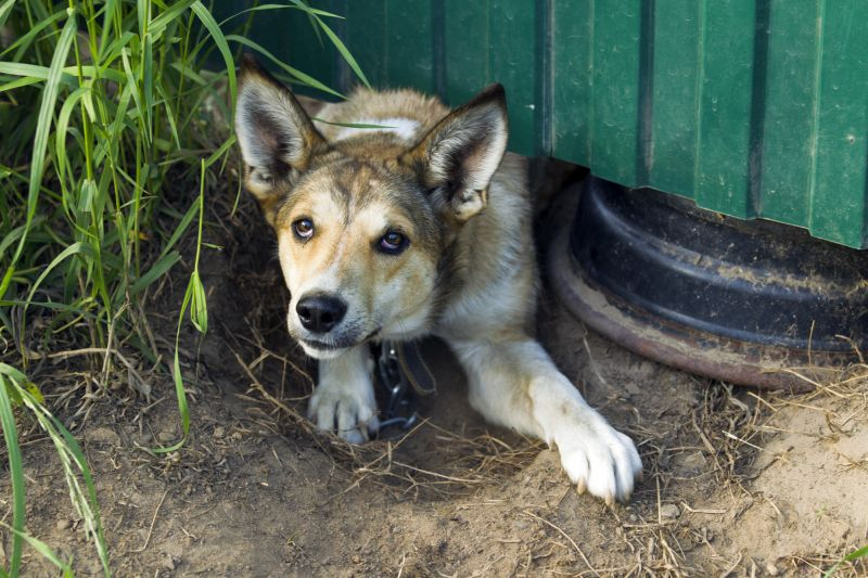 dogs who dig under fences