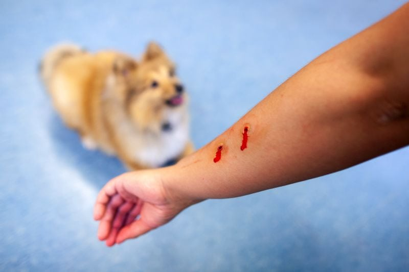 Dogs may be euthanized for biting