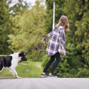dog stops walking during walks