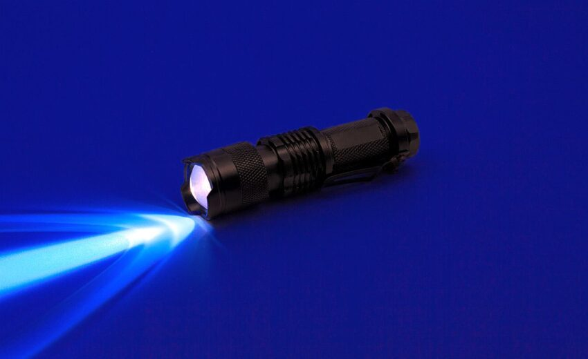 dog urine detector light