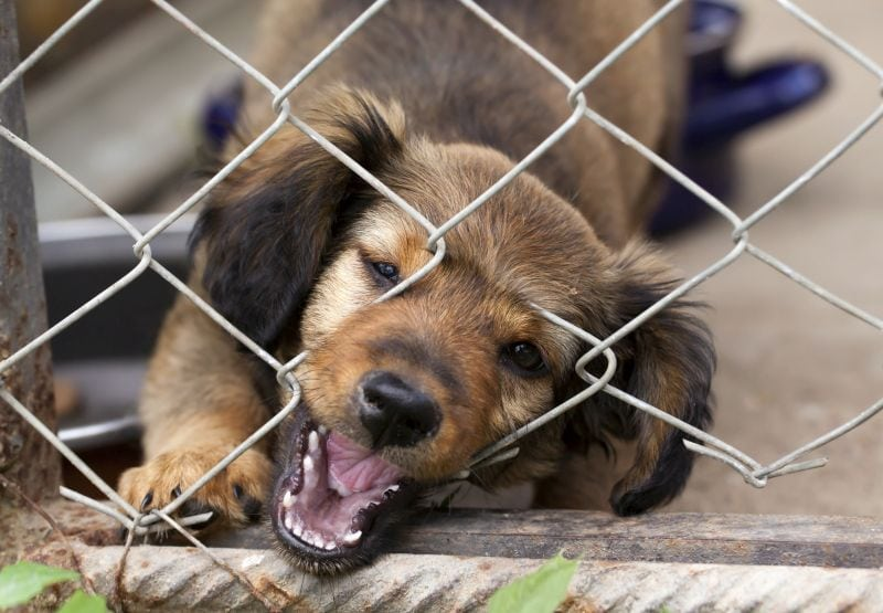some dogs chew through fences