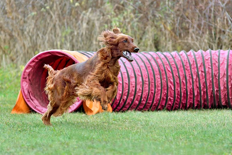 how to pick a dog agility tunnel