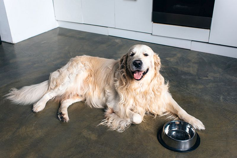 best foods for big dogs