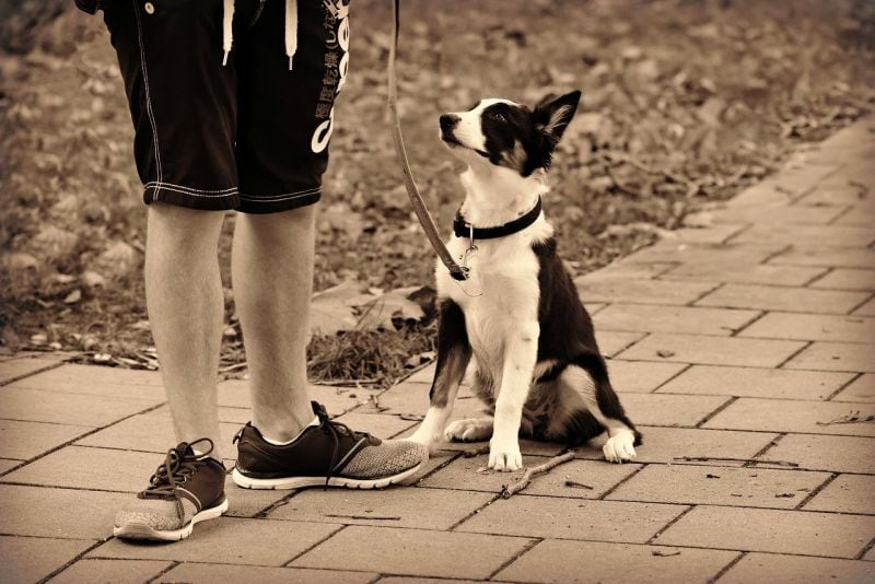 don't do these things when dog stops walking