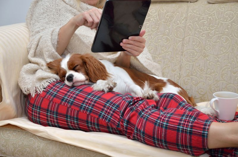 Cavalier King Charles Spaniels are very affectionate