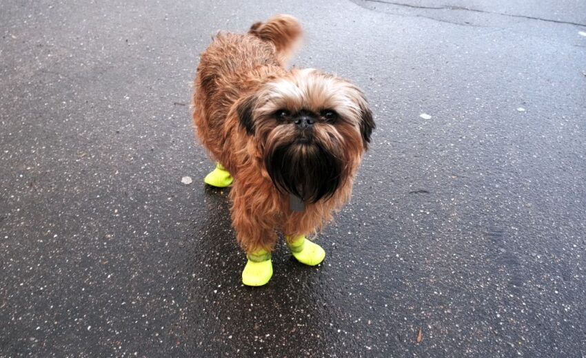 best shoes for dogs