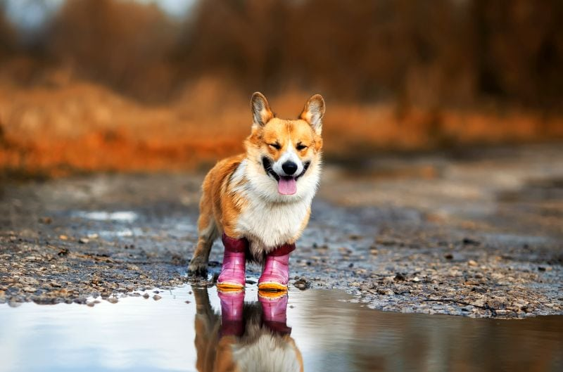 The best shoes for dogs