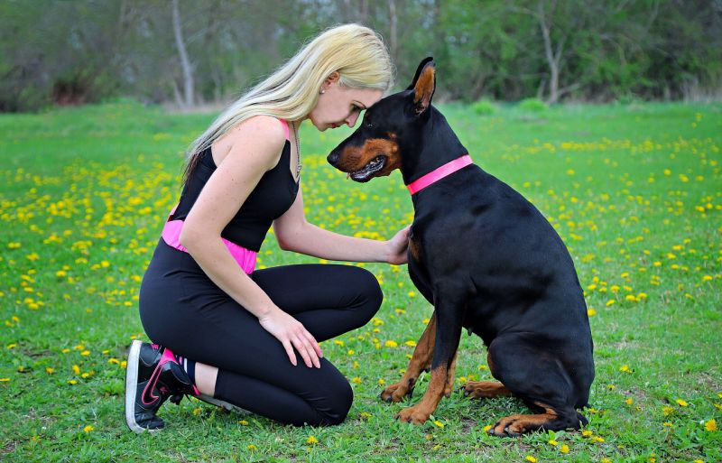 dobermans are very affectionate
