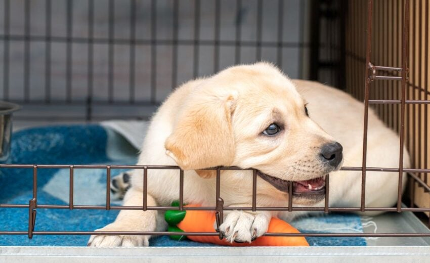 dog crate training games