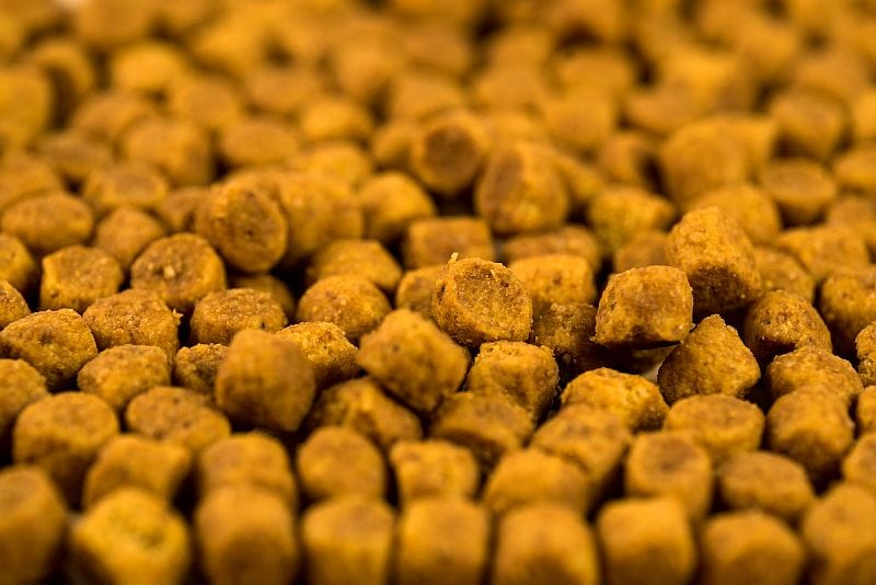 beneficial bacteria in dog food